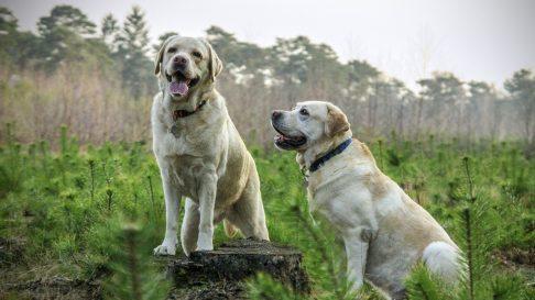 Ce trebuie sa stii despre deparazitarea externa a cainilor