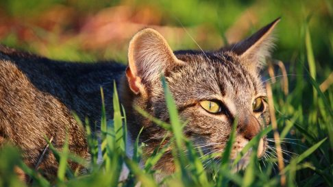 Ce pericole o pandesc pe pisica ta, acasa