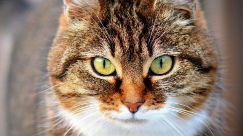 Adevarul despre sterilizarea si castrarea pisicilor