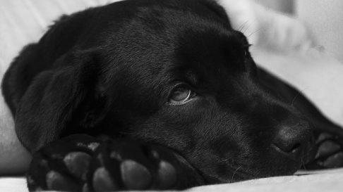Parvoviroza canina. Afla cum poti sa previi o boala care poate fi fatala
