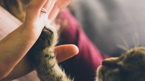 De ce torc pisicile? Stiai ca nu este doar o manifestare a fericirii?
