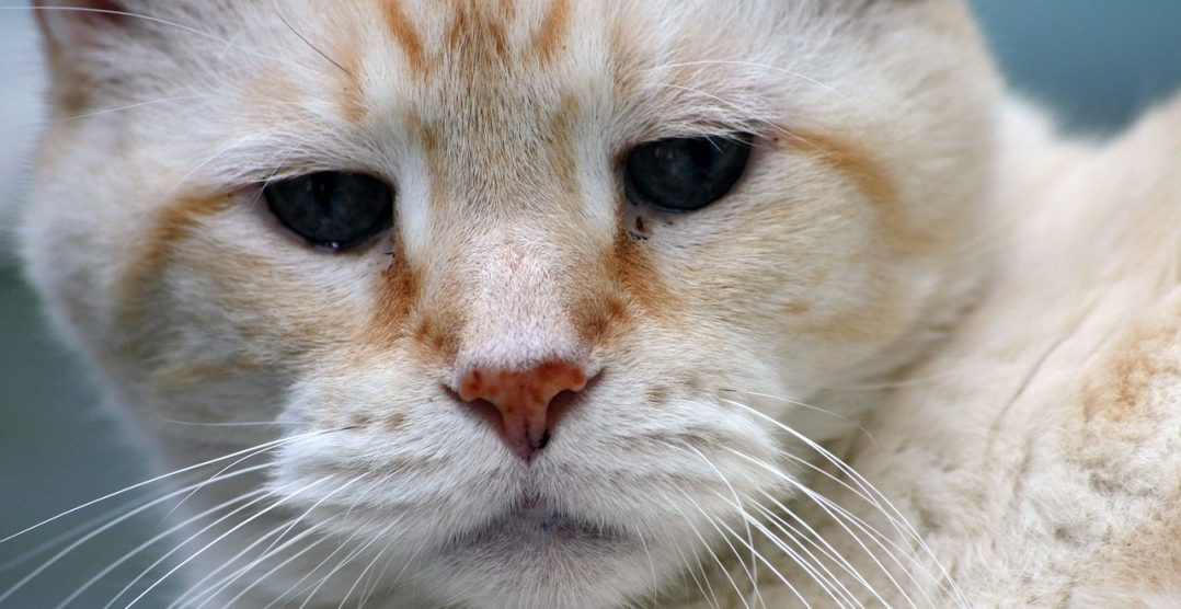 Cum sa ai grija de pisica ta batrana. Sfaturi pentru a-i face viata mai confortabila