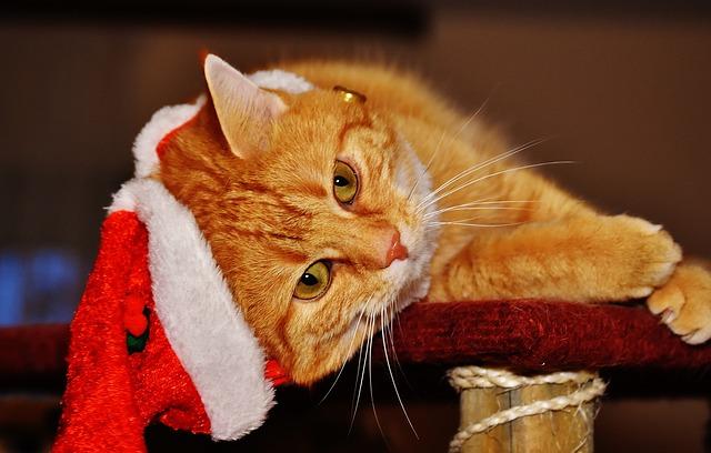 cat-1898613_640