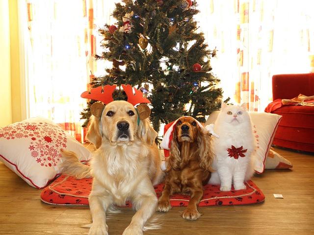 Sfaturi pentru Sarbatori de iarna, fara vizite la veterinar