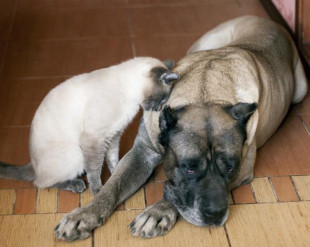Efectele fumatului pasiv asupra animalelor de companie