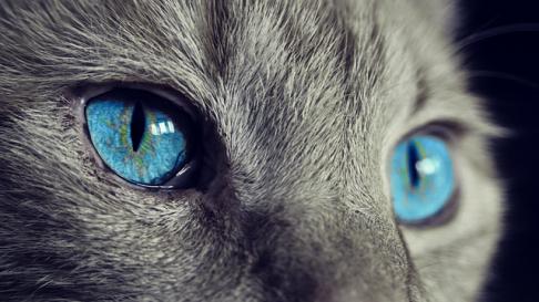 Probleme oculare frecvente la pisici