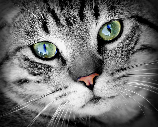 Cum văd pisicile: imaginile care surprind lumea prin ochii lor (GALERIE FOTO)