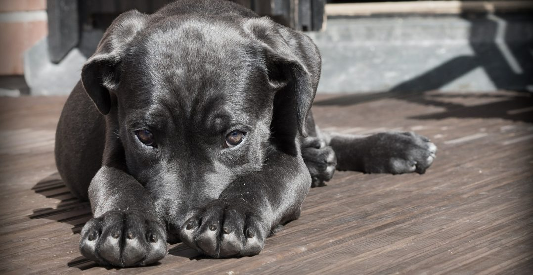 5 comportamente rele pe care stapanii de caini le incurajeaza