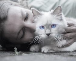 7 Lucruri pe care nu trebuie sa i le faci niciodata pisicii tale