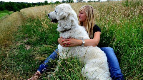 Lucruri pe care nu trebuie sa i le faci niciodata cainelui tau