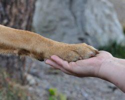 Pericolele caniculei: Arsurile pernutelor la caini