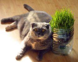Obezitatea la pisici: Cauze si solutii
