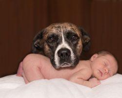 Cainii si Bebelusii: Cum le faci cunostinta?