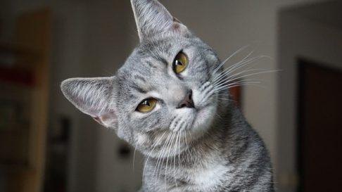 De ce urineaza pisicile in afara litierei: Cauze si Sfaturi Utile