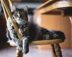 30+ Alimente de la masa ta, sigure pentru pisici
