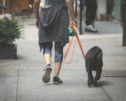 8 Moduri distractive de a face miscare impreuna cu cainele tau