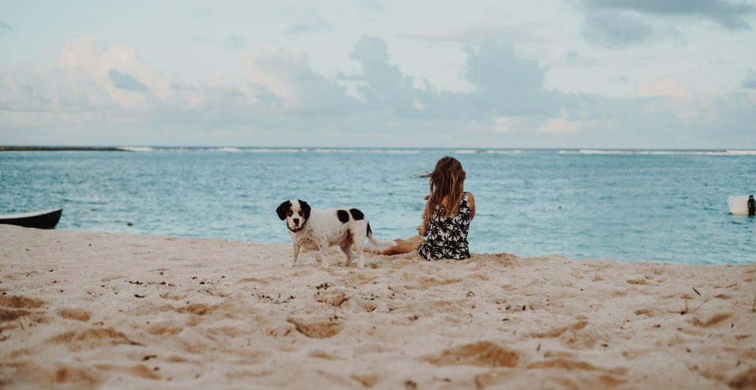 7 Sfaturi utile pentru o vacanta perfecta la plaja, impreuna cu cainele tau