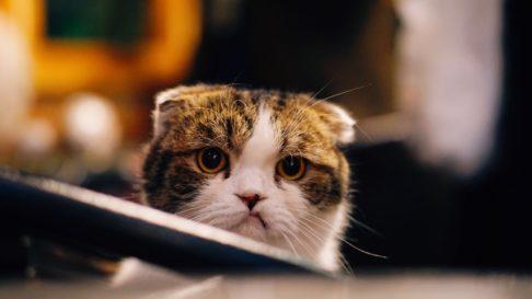 5 Lucruri pe care trebuie sa le stii cand lasi pisica singura acasa