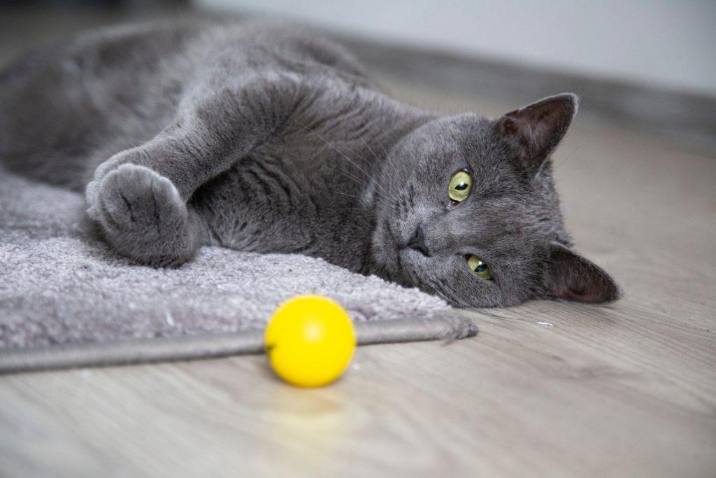 pisica_joaca