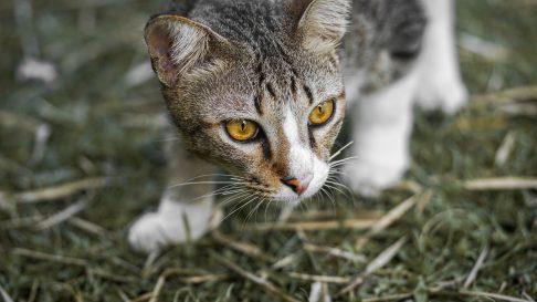 De ce aduc pisicile cadouri stapanilor