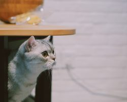 De ce se tem pisicile? Cele mai comune motive