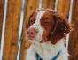 Cum iti poti proteja cainele de efectele vremii reci