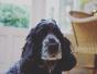 7 Moduri in care poti sa iti ajuti animalul de companie orb