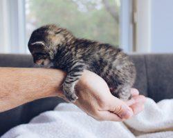 10 Lucruri interesante despre puii de pisica