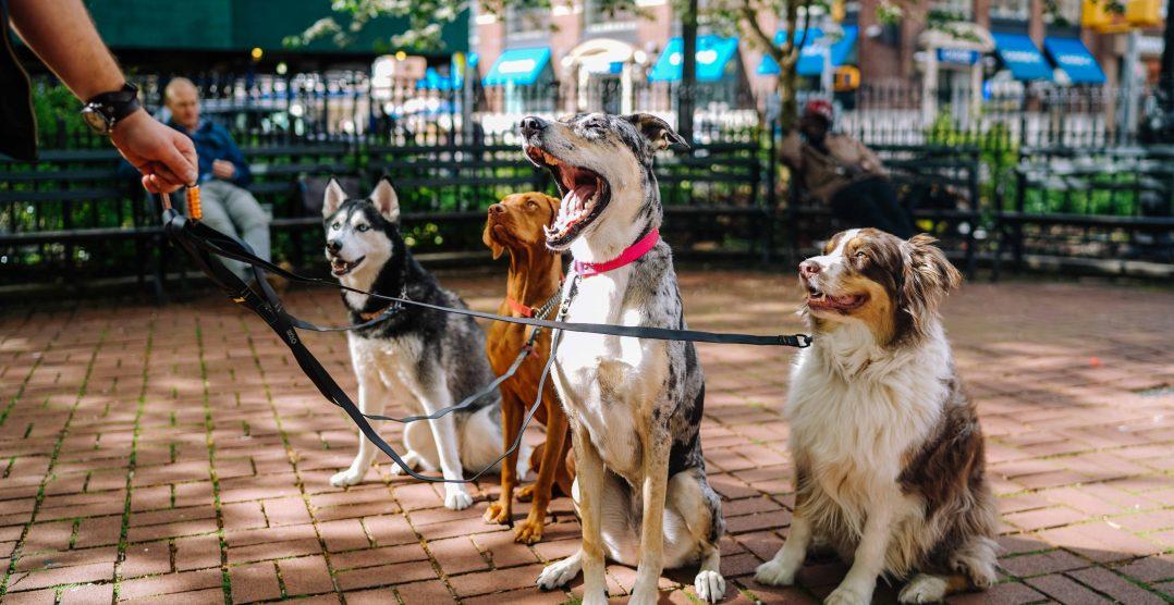 Cele mai contagioase boli canine