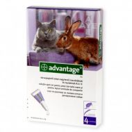 Advantage 80 Pisica - Pipeta Antiparazitara 1 Cutie - 4 Pipete