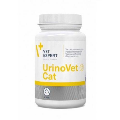 Care sunt cauzele și simptomele cistitei la pisici și ce fel de tratament se aplică în acest caz?